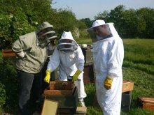 Looking for honey and the queen bee, honey and wax