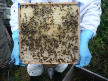 very large hive frame